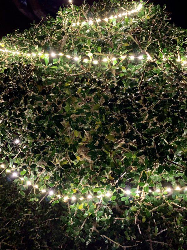 Guirnalda microLED extrabrillante (6 m)